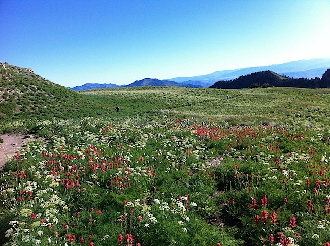 Massive meadows full of wildflowers.jpg