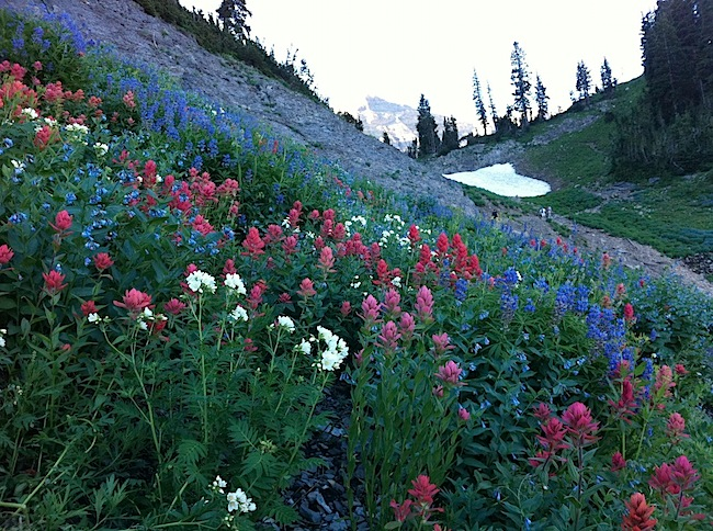 Wildflowers were blooming like crazy.jpg